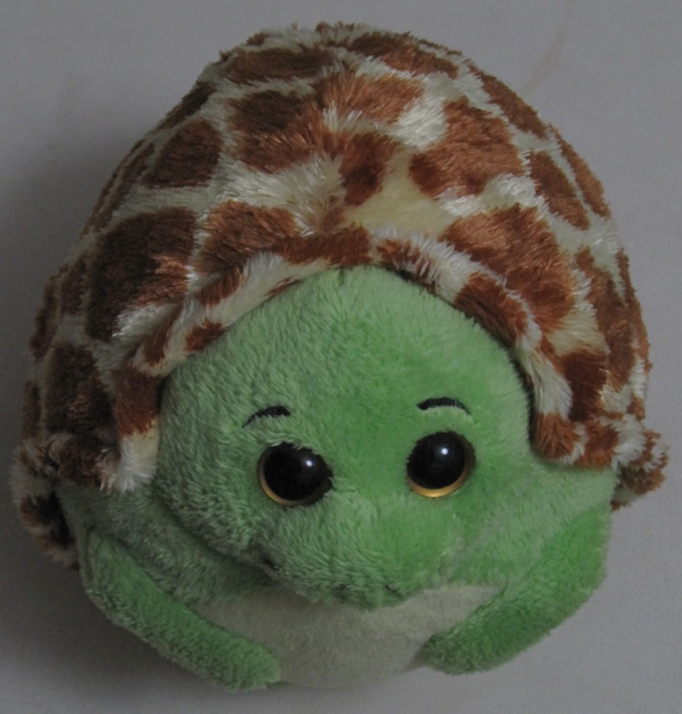 Hedge Turtle